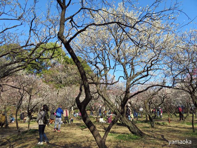 梅咲いてどこまでも歩いていける靴。_f0071480_16471211.jpg