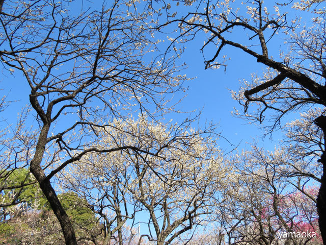 梅咲いてどこまでも歩いていける靴。_f0071480_16471507.jpg