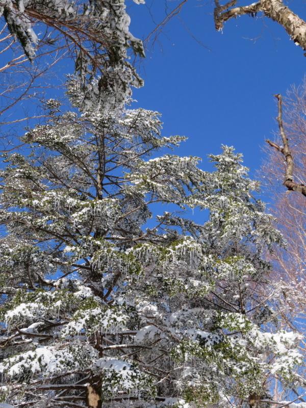 青空と樹氷 南沢山 (1,564M)      登頂 編_d0170615_09524783.jpg