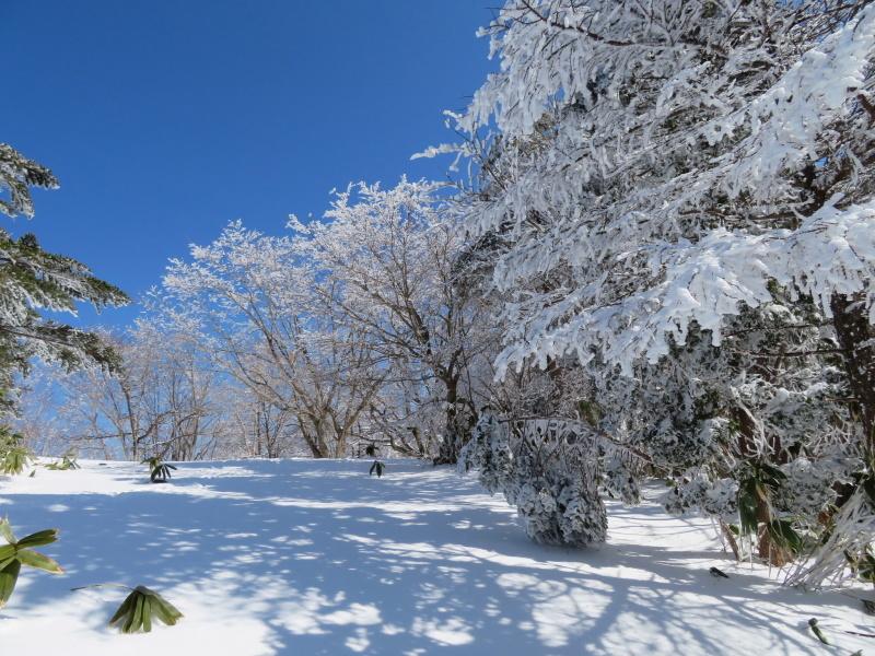 青空と樹氷 南沢山 (1,564M)      登頂 編_d0170615_09525718.jpg