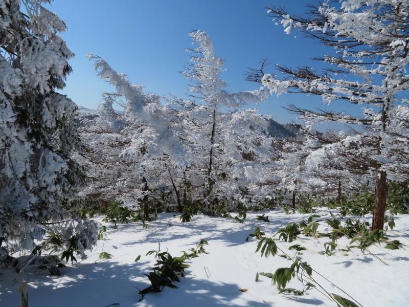 青空と樹氷 南沢山 (1,564M)      登頂 編_d0170615_09530531.jpg