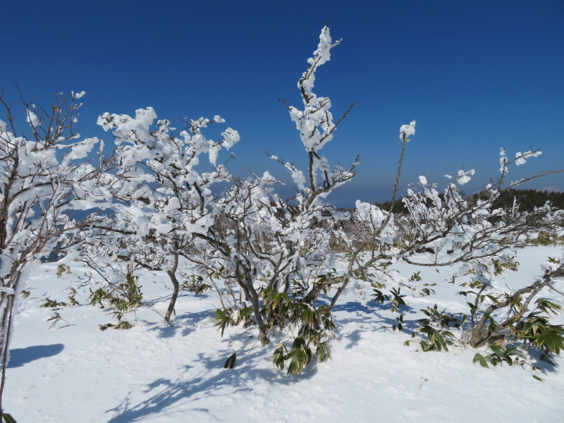 樹氷林を行く 南沢山 (1,564M)    横川山 編_d0170615_22591570.jpg