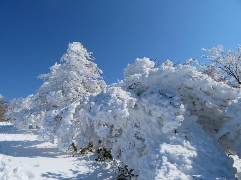 樹氷林を行く 南沢山 (1,564M)    横川山 編_d0170615_22593444.jpg