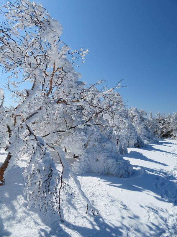 樹氷林を行く 南沢山 (1,564M)    横川山 編_d0170615_22594548.jpg