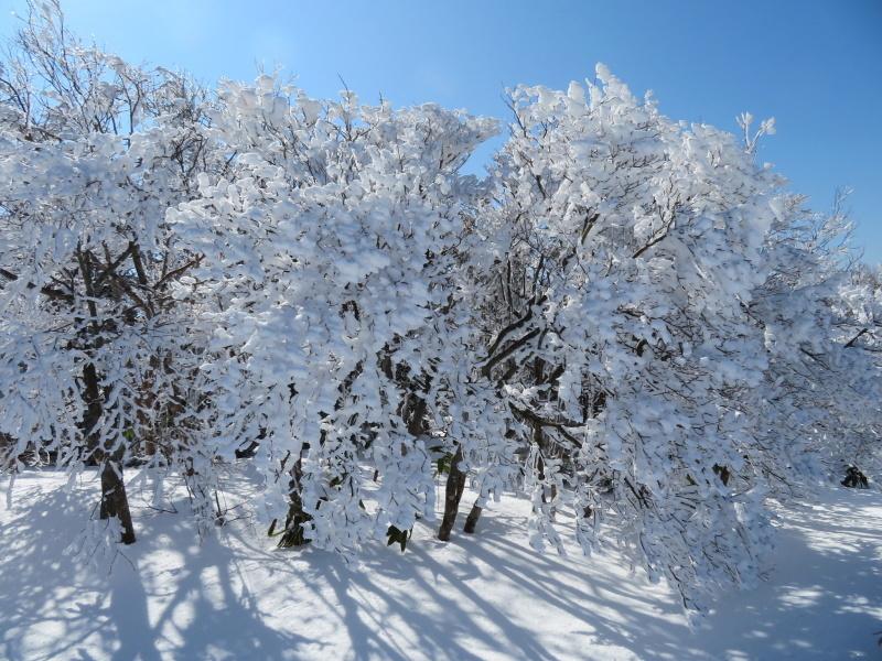 樹氷林を行く 南沢山 (1,564M)    横川山 編_d0170615_22595461.jpg