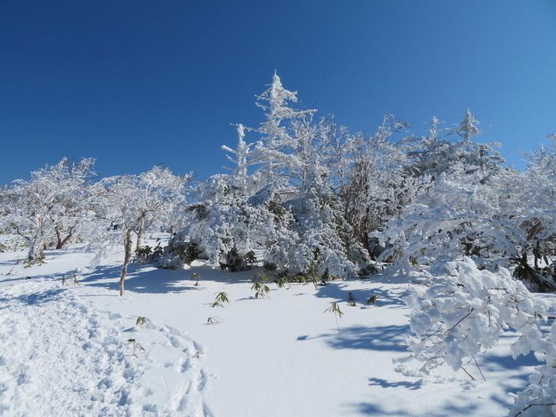 樹氷林を行く 南沢山 (1,564M)    横川山 編_d0170615_23000235.jpg