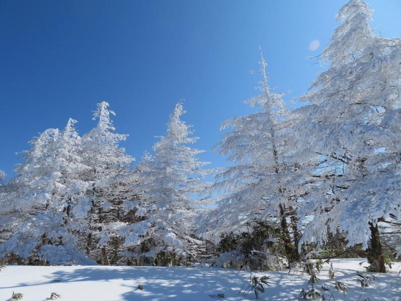 樹氷林を行く 南沢山 (1,564M)    横川山 編_d0170615_23002681.jpg