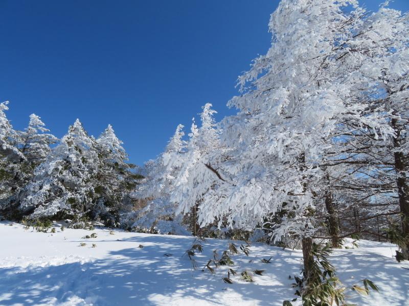 樹氷林を行く 南沢山 (1,564M)    横川山 編_d0170615_23003551.jpg