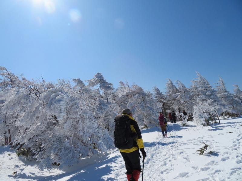 樹氷林を行く 南沢山 (1,564M)    横川山 編_d0170615_23005330.jpg