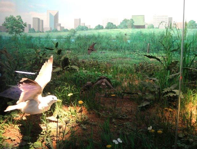 <2021年2月>【北区探訪】①:渋沢栄一に所縁深い「王子・飛鳥山」編_c0119160_07391255.jpg