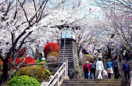 <2021年2月>【北区探訪】①:渋沢栄一に所縁深い「王子・飛鳥山」編_c0119160_08415685.jpg