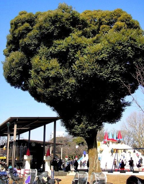 <2021年2月>【北区探訪】①:渋沢栄一に所縁深い「王子・飛鳥山」編_c0119160_10344913.jpg