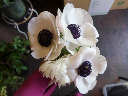 花修行~白と赤のアネモネのアレンジメント~_f0232060_11594532.jpg