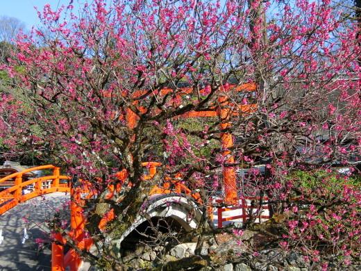下鴨神社_f0226671_21524153.jpg