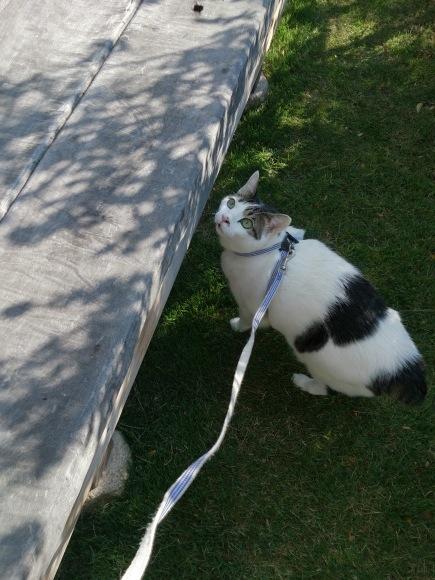 スグルのお散歩写真とミルちゃんの巣作り写真_e0171874_19062730.jpg