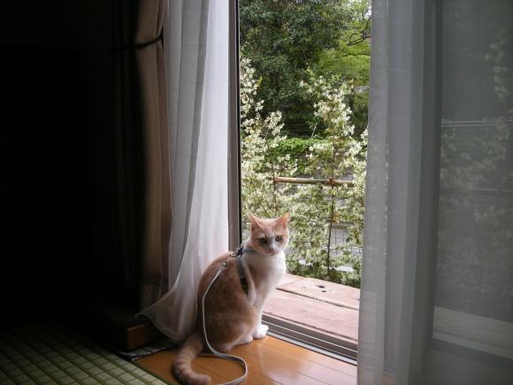 スグルのお散歩写真とミルちゃんの巣作り写真_e0171874_19181436.jpg