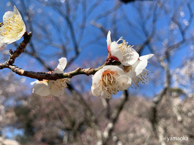 囀はわが死後の木に_f0071480_17344655.jpg