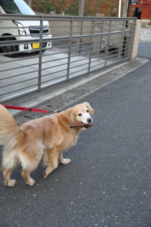 ムギちゃんとお散歩♪_b0275998_16022863.jpg