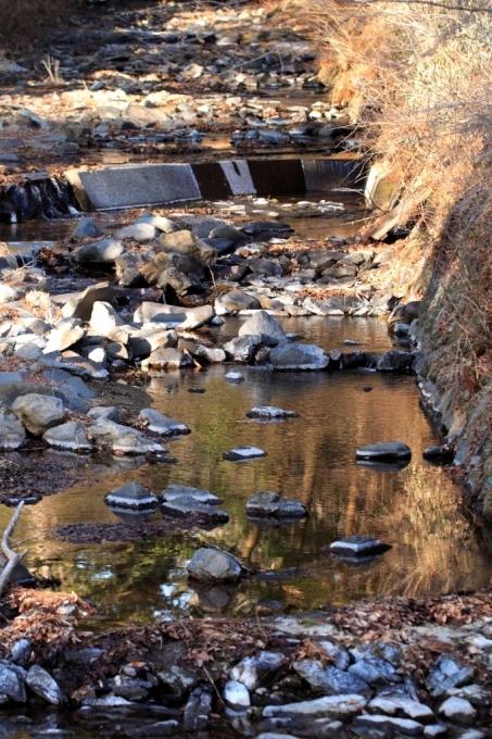 氷が溶けて、水が春の気配です_f0091207_00470658.jpg