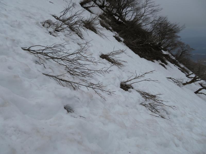 雪の 伊吹山 (1,377.3M)    下山 編_d0170615_19091720.jpg