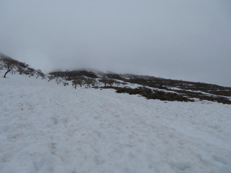 雪の 伊吹山 (1,377.3M)    下山 編_d0170615_19092524.jpg