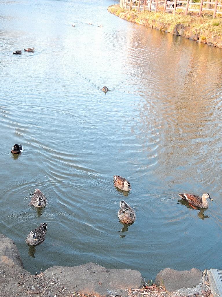 ある風景:Kikuna pond, Yokohama@Feb 2021_d0393923_23290418.jpg