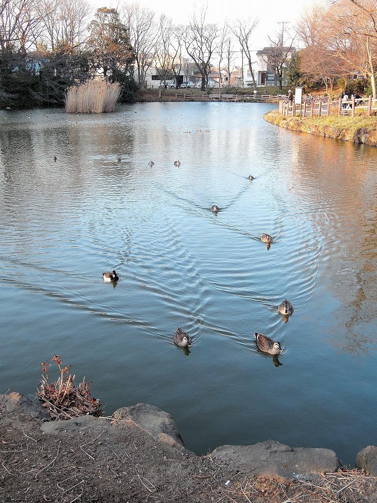 ある風景:Kikuna pond, Yokohama@Feb 2021_d0393923_23290464.jpg
