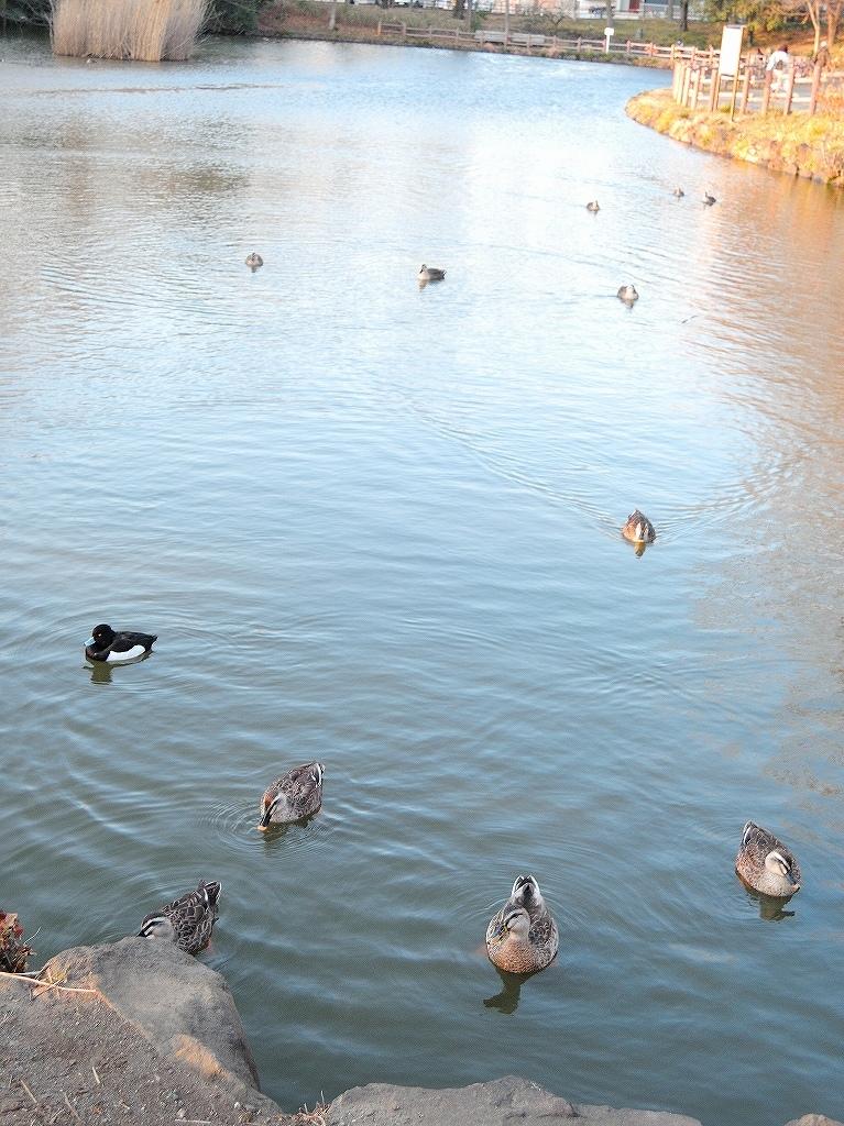 ある風景:Kikuna pond, Yokohama@Feb 2021_d0393923_23290466.jpg