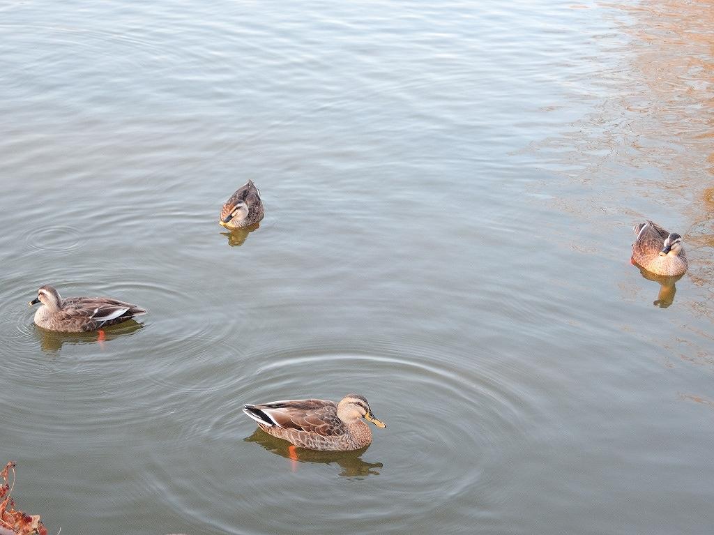 ある風景:Kikuna pond, Yokohama@Feb 2021_d0393923_23291959.jpg