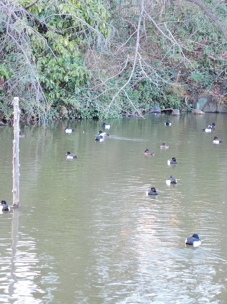 ある風景:Kikuna pond, Yokohama@Feb 2021_d0393923_23292013.jpg