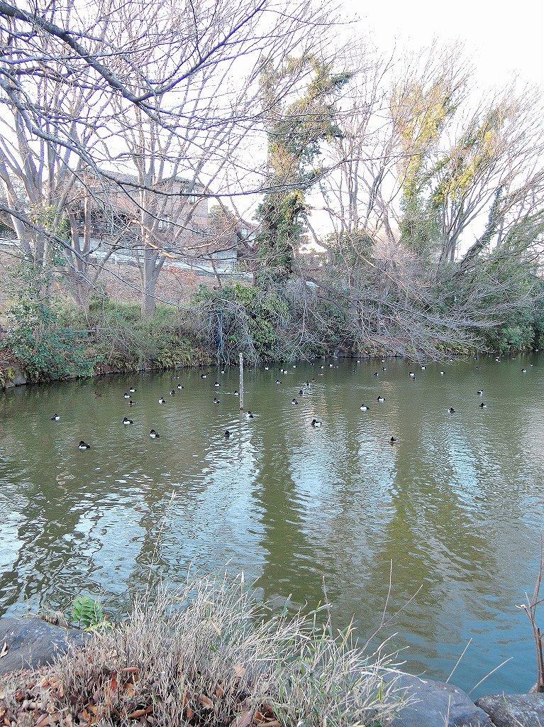 ある風景:Kikuna pond, Yokohama@Feb 2021_d0393923_23292097.jpg