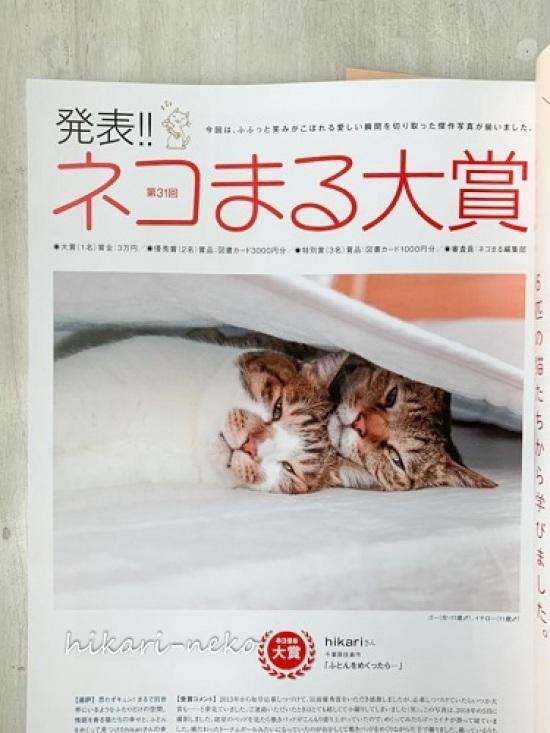 横たわったトーテムポールで「猫まる大賞」いただきました_e0364523_22152247.jpg
