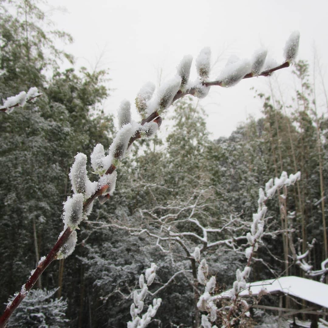 藪椿に雪(2/18)_d0336460_00140022.jpg