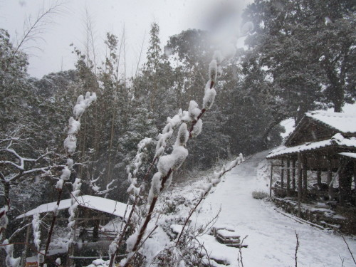 藪椿に雪(2/18)_d0336460_00151549.jpg