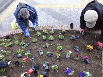 ガーデンふ頭総合案内所前花壇の植替えR3.2.18_d0338682_10171082.jpg