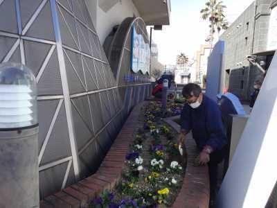 ガーデンふ頭総合案内所前花壇の植替えR3.2.18_d0338682_10193118.jpg