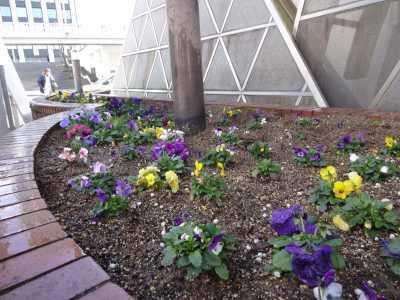 ガーデンふ頭総合案内所前花壇の植替えR3.2.18_d0338682_10204615.jpg