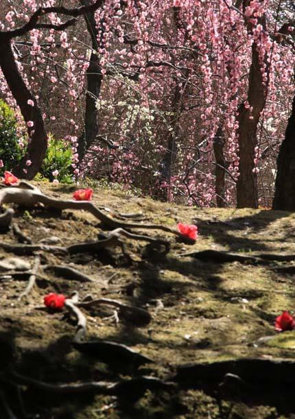 椿も盛りです 城南宮_e0048413_17562499.jpg