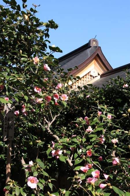 椿も盛りです 城南宮_e0048413_17563549.jpg