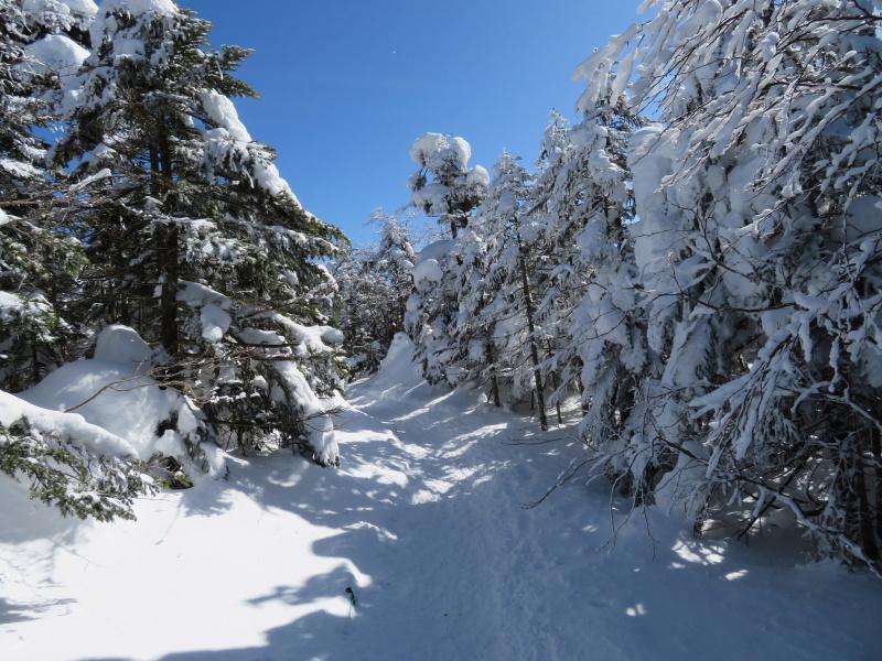 坪庭が美しい 北横岳 から  縞枯山 (2,403M) に向かう_d0170615_19504164.jpg