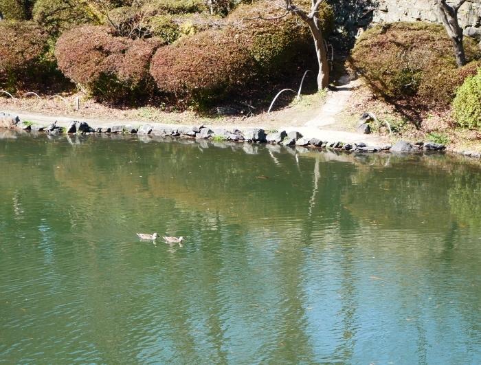 春待つ和歌山城北堀  2021-02-25 00:00_b0093754_17412936.jpg