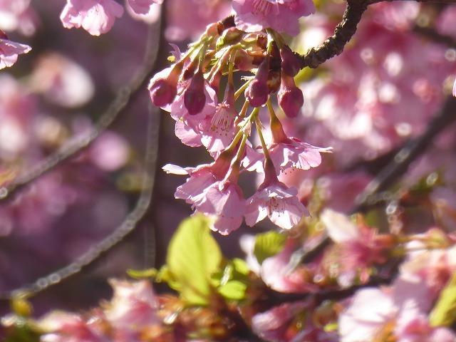 河津桜を見に行ったのに♪ ワンちゃんばかり見ていた代々木公園の春♪_b0287088_22040321.jpg