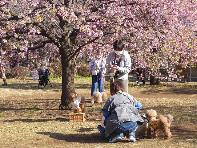 河津桜を見に行ったのに♪ ワンちゃんばかり見ていた代々木公園の春♪_b0287088_22085618.jpg