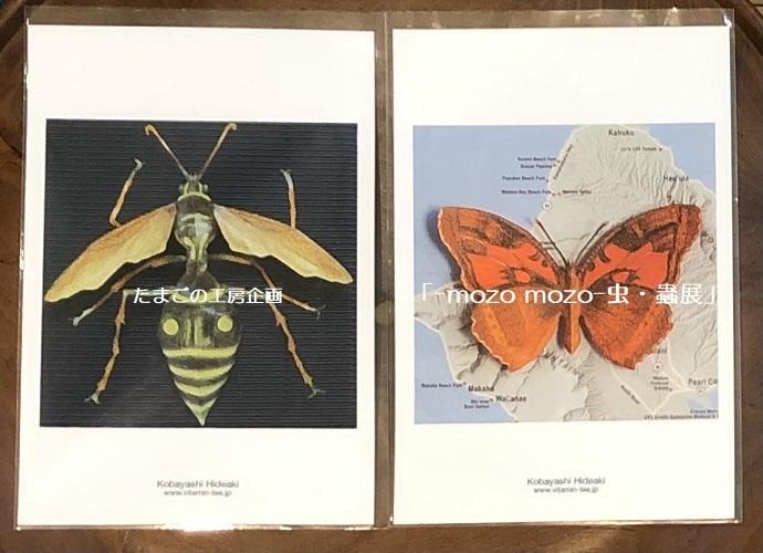 たまごの工房企画「-mozo mozo- 虫・蟲展」 その8_e0134502_19521194.jpg