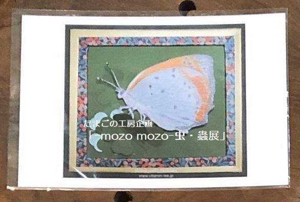 たまごの工房企画「-mozo mozo- 虫・蟲展」 その8_e0134502_19522916.jpg