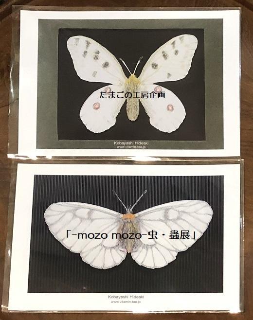 たまごの工房企画「-mozo mozo- 虫・蟲展」 その8_e0134502_19524022.jpg