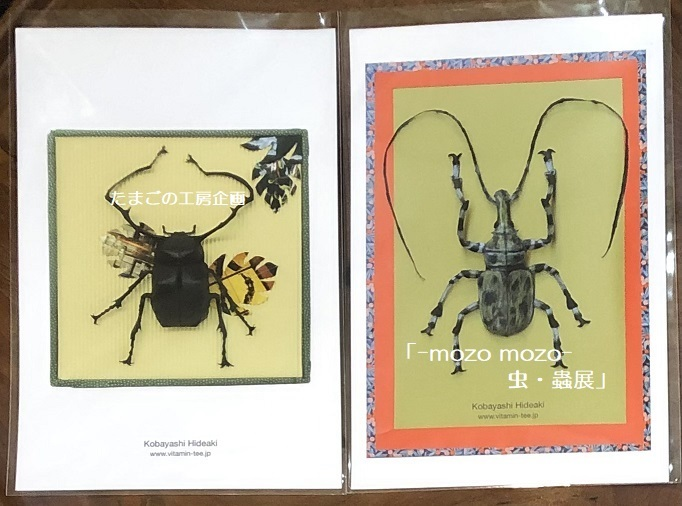 たまごの工房企画「-mozo mozo- 虫・蟲展」 その8_e0134502_19524980.jpg