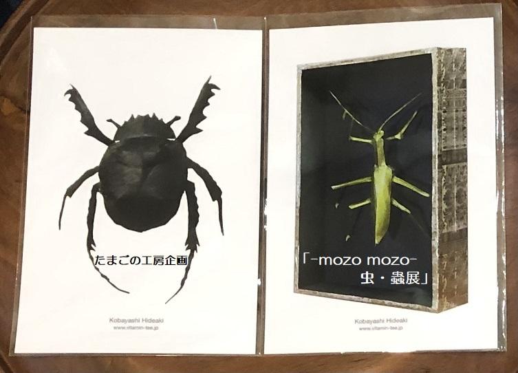 たまごの工房企画「-mozo mozo- 虫・蟲展」 その8_e0134502_19525890.jpg
