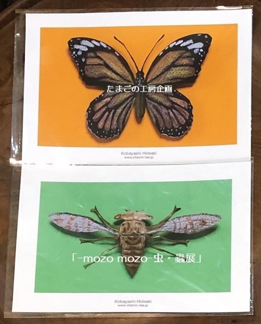 たまごの工房企画「-mozo mozo- 虫・蟲展」 その8_e0134502_19530464.jpg