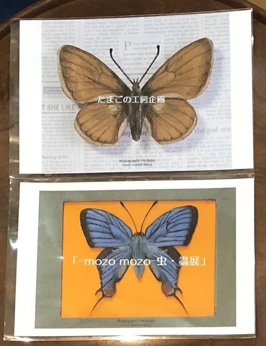 たまごの工房企画「-mozo mozo- 虫・蟲展」 その8_e0134502_19530961.jpg